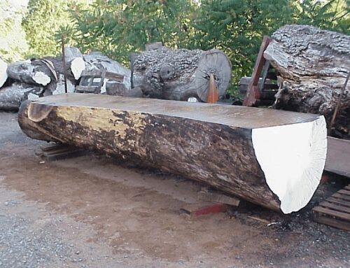 Claro Walnut Limb Log
